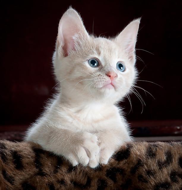 【二人の出会い】ダンボールに入れられた子ネコ発見 。そのネコ拾ったら嫁も拾えた。