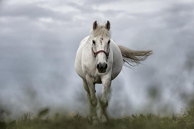 【二人の出会い】嫁は、白馬に乗った王子様がいつも助けに来てれてると思い込んでいた