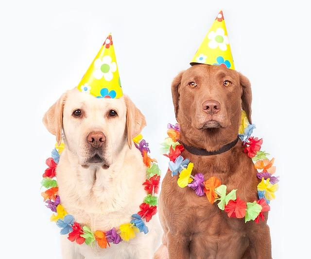 【二人の出会い】犬好きの二人が結婚を決意したのは和歌のやりとり。「せをはやみ・・・」