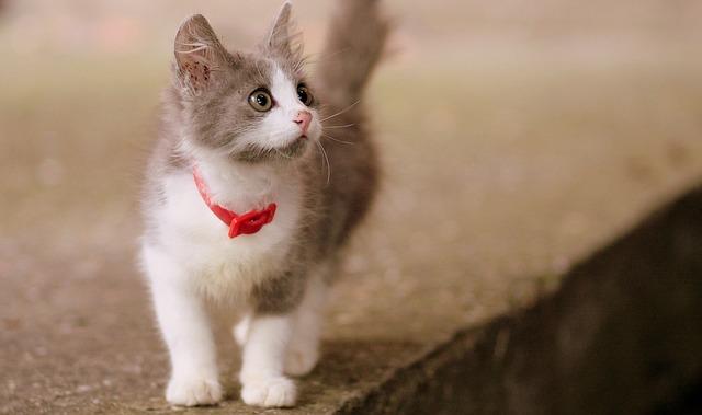 【二人の出会い】俺21、嫁14の時、迷子のタマ(俺の愛猫)がきっかけ。俺「タマを連れて帰りたいんだけどぉ」 嫁「イヤです!返しません!」