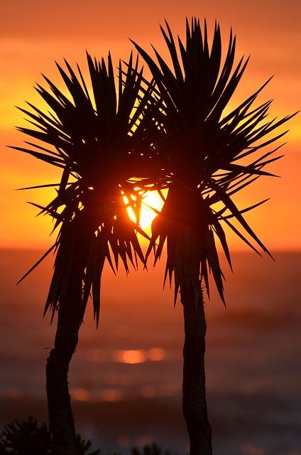 【愛してる】ベトナム旅行。夕暮れ時にヤシの木の下で嫁を抱き寄せ…今までで一番綺麗だった。