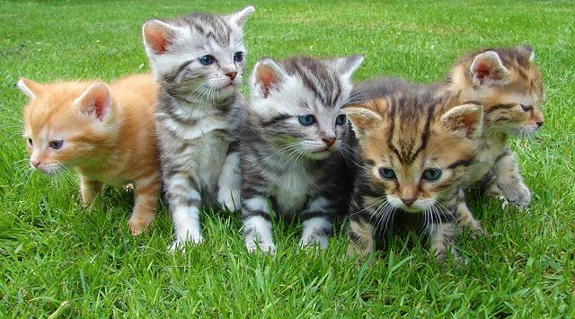 【嫁大好き】嫁が拾ってきた子猫に毎日ベッタリの俺。嫁「私もメスだ!!!」って・・・