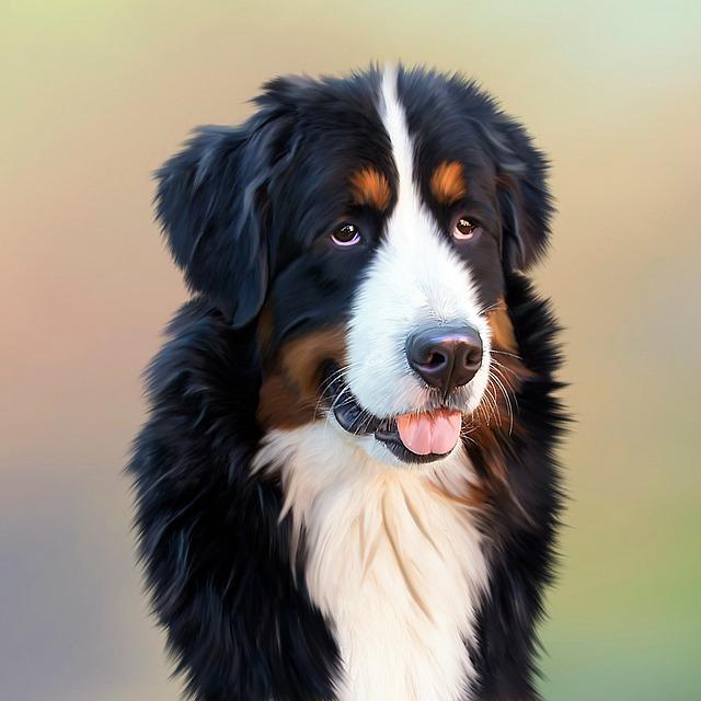 【衝撃】うちのメス犬にやたら好かれている。俺が風呂から出ると息子の先をペロペロ舐める…