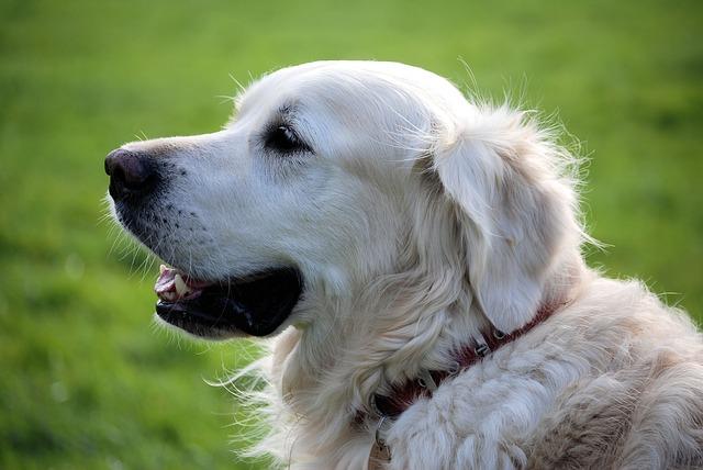 【衝撃】ペット禁止のアパートで犬を飼ってたおっさん「コイツ(犬)を殺せってのか 」