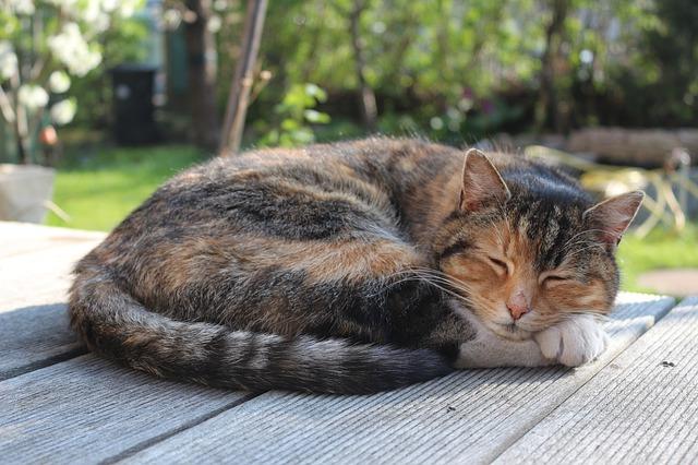 最近本当に眠れない。眠剤は3種類出ているんだけど毎日飲むと効果が薄くなる…