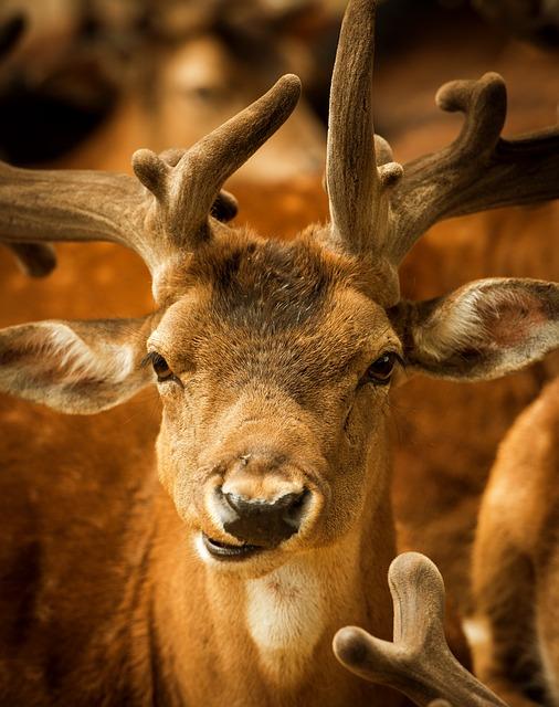 【びっくりポン】元カレ、奈良公園で鹿4頭に襲われる…